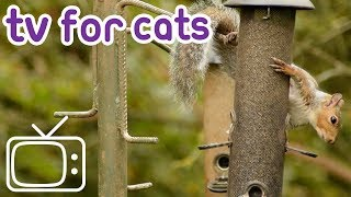 Calming TV for Cats: Garden birds, Red Squirrels, and Rats!