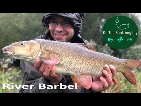 River Fishing - Barbel On The River Nene