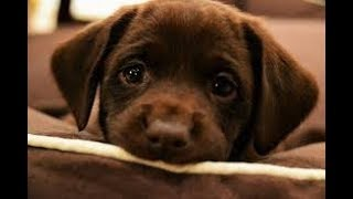 🐶💖 So many cute puppies videos compilation 2018🐶💖