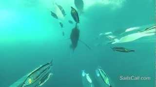 Fishing calendar costa rica for Costa rica fishing calendar