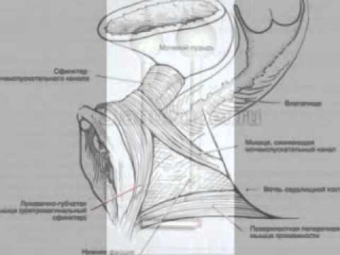 Как получить вагиниальный оргазм