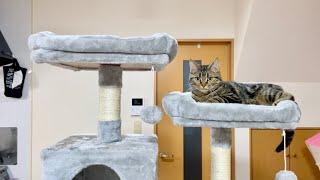 手術を頑張った猫に巨大なキャットタワーをプレゼントしてみた結果!