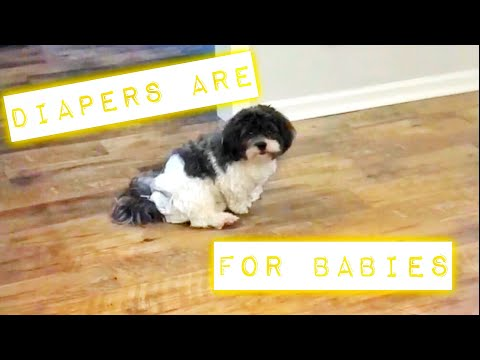 DOG IN DIAPERS | FUNNY VIDEO | Family 5 Vlogs