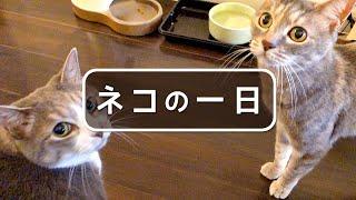 ネコの一日 - One day of a Cat -