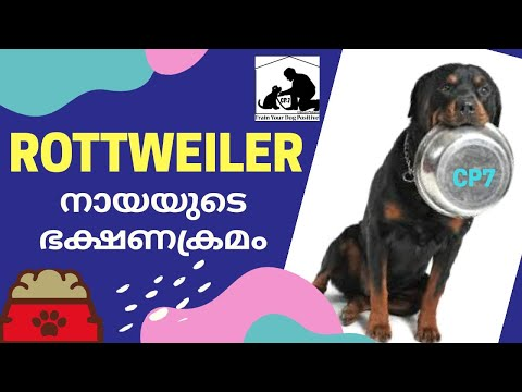 Rottweiler Diet Malayalam : Dog Food : Puppy Food : Part 1