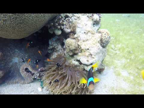 Israel Eilat 2017 02 scuba diving