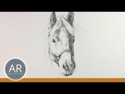 Pferdekopf Zeichnen Pferde Zeichnen Lernen Pferde