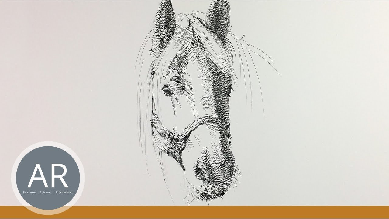 Pferdekopf Zeichnen Pferde Zeichnen Lernen Pferde Portraits