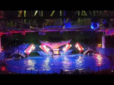 Shamu's Celebration: Light Up The Night at SeaWorld Orlando