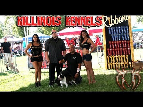 AMERICAN BULLY DOG SHOW JUDGE WITH OVER 20 YEARS OF EXPERIENCE WITH THE BREED, KILLINOIS DAYTON