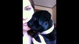 Pug Kisses Girl