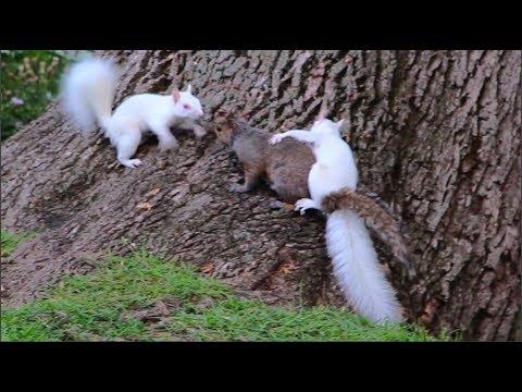 Tim Palmer - Albino Squirrels