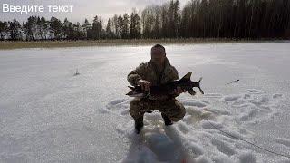 Охота на трофея на озере Янисъярви