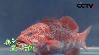 《谁知盘中餐》 20200614 琼海石斑鱼透着鲜 CCTV农业
