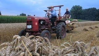 Historischer Feldtag - Getreide-Ernte u. Dreschen