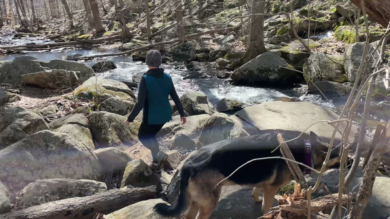 Ep199 Spring 2021 German Shepherd's Hiking Video Hiking with Dog in the wilderness - forest
