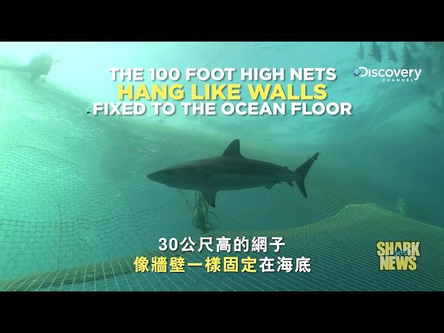 鯊魚週30週年特輯 Shark News : 混獲