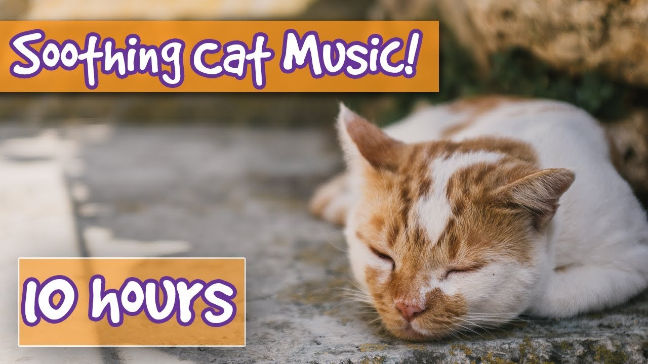 Soothing Music For Cats With Sound Effects Included Music With Purring Sound Effects To Relax Cats Youtube