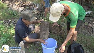 Đặt Lợp Bắt Cá Bóng Dừa - Bữa Cơm Dân Dã | Hội Ngộ Miền Tây - Tập 50