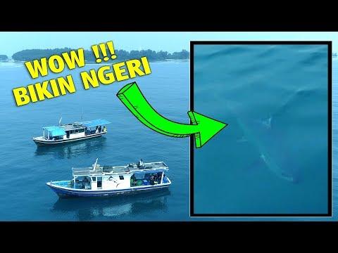 SHOCK GUE !!! KETEMU IKAN RAKSASA DI LAUT (Mancing IKAN di Laut Nusantara) - Mancing Mania
