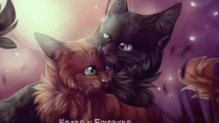Белка и Ежевика (Squirrelflight & Brambleclaw)-You were meant me | Коты воители