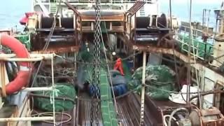 Brutaler Fisch Massaker  balik katliami