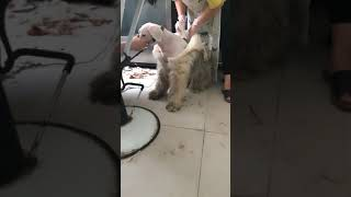 dog take off its coat