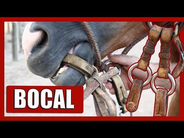 Conheça a ferramenta usada na DOMA GAÚCHA!