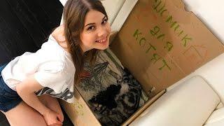 Роды у кошки.  Весь процесс приема родов у кошки с оказанием помощи.