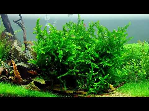 Водные растения12 Декоративные растения