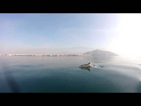 Dolphins at Volos-Greece