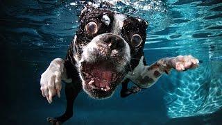 САМЫЕ СМЕШНЫЕ СОБАКИ 2015 - Лучшая Подборка #1 - Прикольные и Весёлые Собаки - ДО СЛЁЗ