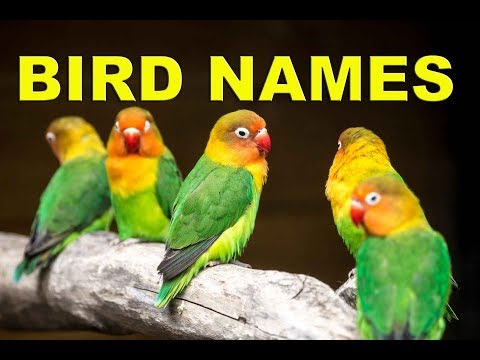 Birds Names In English With Pictures - Birds Name List