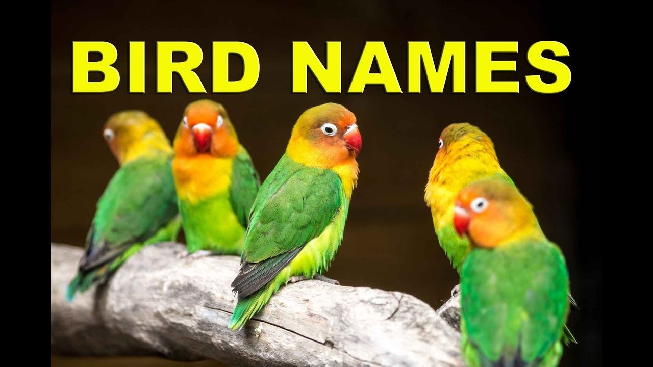 Bird Names: List of 35+ Popular Types of Birds with ESL ...