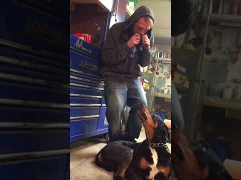 Singing Dog! Doberman mix holds a tune with a Harmonica.