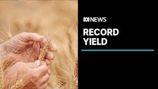 Australian farms post record year with $66 billion of produce | ABC News