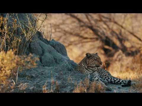 Botswana Luxury Safari, Abercrombie & Kent