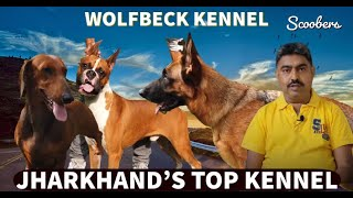 JHARKHAND TOP KENNEL | WOLFSBECK KENNEL | GERMAN SHEPHERD | BOXER | Dachshund | DOBERMAN | SCOOBERS