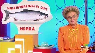 Жить здорово! Нерка— полезная красная рыба  (25 04 2017)