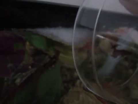 Moving A Betta Fish's Bubble Nest