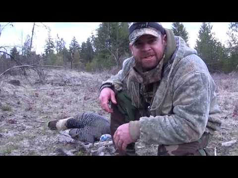 Chewelah Washington Solo Turkey Hunt