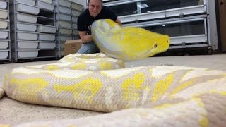 GIANT SNAKE GETS NEW HOME!!! Brian Barczyk
