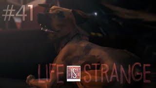 АНГЕЛ СРЕДИ БУРИ 🦢 Life is Strange #41