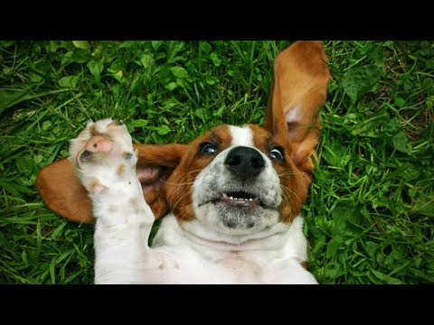 Funny and Crazy Dogs Playing 🐶 [Funny Pets]