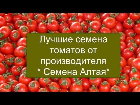 """Сорта томатов от производителя """"Семена Алтая"""" . Выбираем лучшие!"""