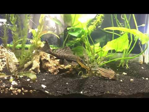 Freshwater 20 Gal tank