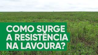 Como surge a resistência de plantas daninhas na lavoura?