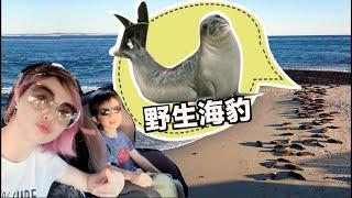 [美國Vlog] 野生海豹跟獅子只離我3公分!探險動物樂園好精彩!Safari Park    沛莉小陶德