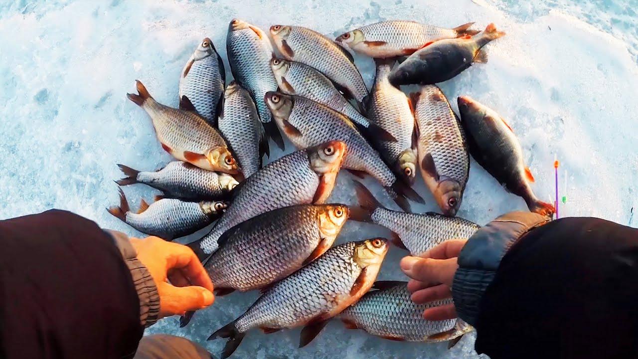 ТАКОЙ КРУПНОЙ ПЛОТВЫ Я ЕЩЕ НЕ ЛОВИЛ! Зимняя рыбалка 2019. Безмотылка ЧЕРТИК и ГВОЗДЕШАРИК