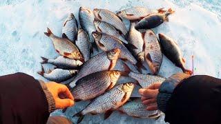 ТАКОЙ КРУПНОЙ ПЛОТВЫ Я ЕЩЕ НЕ ЛОВИЛ Зимняя рыбалка 2019 Безмотылка ЧЕРТИК и ГВОЗДЕШАРИК